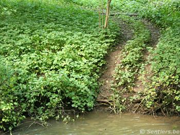 Rouler dans une rivière est interdit et détériore les berges (ici, l'Eau-d'Yves à Yves-Gomezée) - © Sentiers.be
