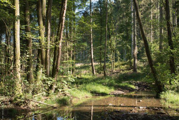 À l'autre extrémité du bois, en venant du hameau de Deux-Rys, un gué permet de retraverser la forêt dans l'autre sens via les tracés supposés des chemins vicinaux N°25 et N°34 - © Tous à Pied