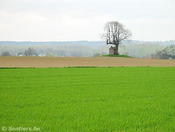 Un sentier mène à la « St-Jozefskapel », tout près du château de Horst. Une astreinte est prévue tant qu'il n'est pas réhabilité - © Sentiers.be